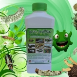 เชื้อราเมธาไรเซียม ชนิดน้ำ กำจัดแมลงศัตรูพืช