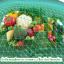 หัวเชื้อราไตรโคเดอร์มา บริสุทธิ์ สำหรับขยายเชื้อ ป้องกันโรคพืช thumbnail 11