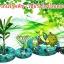 เชื้อราไตรโคเดอร์มา ชนิดน้ำ ป้องกันโรคพืช thumbnail 16