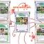 ชุดขยายเชื้อ5พลัง กำจัดแมลงศัตรูพืชและโรคพืช thumbnail 1
