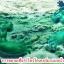 เชื้อราไตรโคเดอร์มา ชนิดน้ำ ป้องกันโรคพืช thumbnail 11