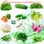 เชื้อราไตรโคเดอร์มา ชนิดน้ำ ป้องกันโรคพืช thumbnail 13