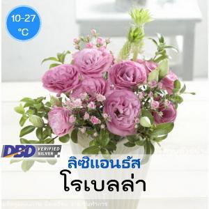 ไม้ตัดดอก ลิซิแอนธัส โรเบลล่า (Robella Series) 2.39-2.60 บาท/เมล็ด