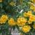 เมล็ดพันธุ์ดอกไม้สวย (ไทย)