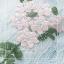 ชุดเดรสเกาหลี พร้อมส่ง เดรสยาว สีฟ้า ปักลายดอกไม้สีฟ้า-สีชมพู thumbnail 5