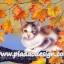 กระดาษสาพิมพ์ลาย สำหรับทำงาน เดคูพาจ Decoupage แนวภาำพ เจ้าแมวน้อยจอมซน ปีนขึ้นไปเล่นบนต้นเมเปิ้ล thumbnail 1